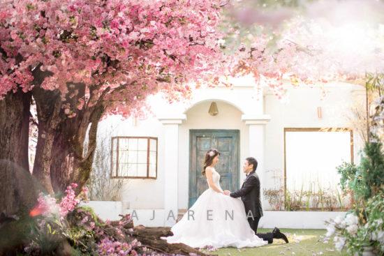 人気の桜の木の下